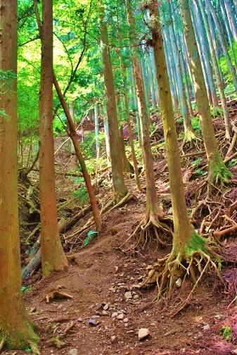 伊豆ヶ岳8