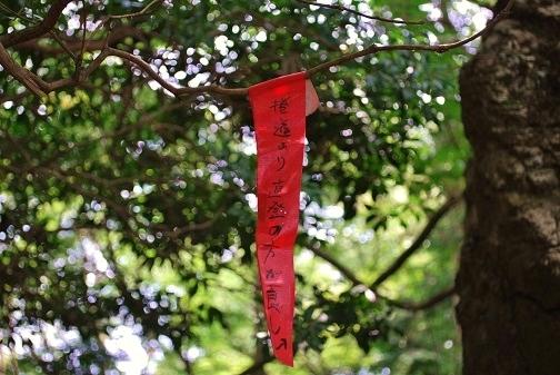 伊豆ヶ岳24
