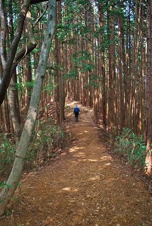 伊豆ヶ岳35