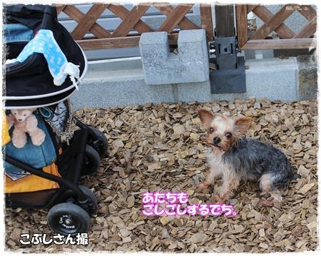 IMG_4895つ