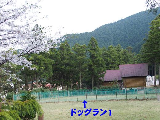 13330-13.jpg