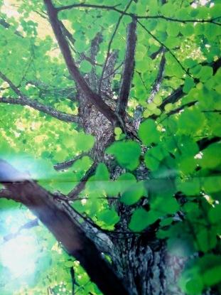 karenndaa33.jpg