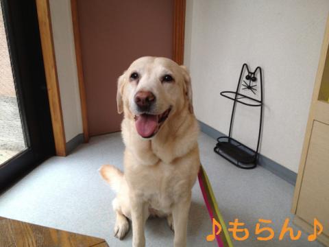 130419 狂犬病予防注射-1