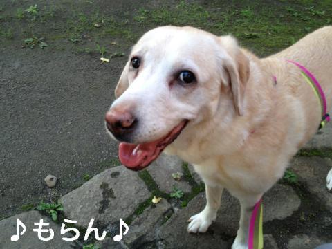 130627 お散歩-1