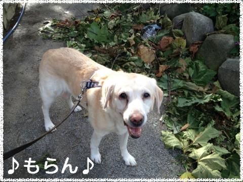 131016 台風一過の昼散歩-4