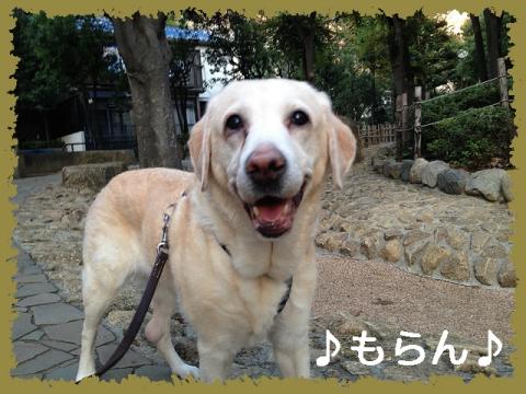 131028 秋晴れ散歩-2