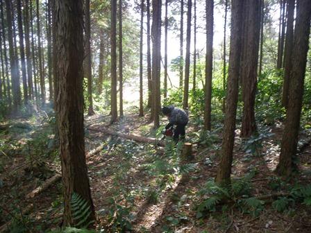 森のたね 富士山田舎暮らし 劣勢木間伐