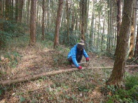 森のたね 富士山田舎暮らし 玉切りチョークひき
