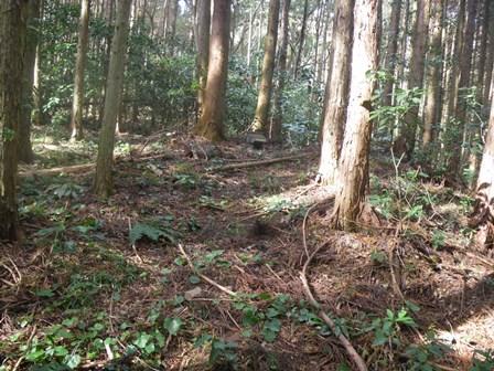 森のたね 山の神様 復活作戦