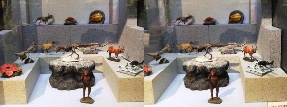 龍遊館 国立科学博物館展示物(平行法)