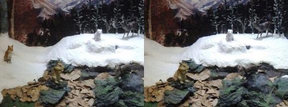 龍遊館 日本の冬の動物(平行法)
