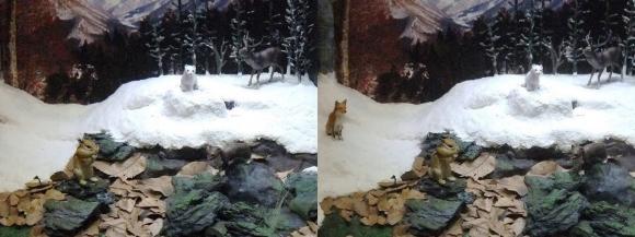 龍遊館 日本の冬の動物(交差法)