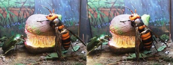 龍遊館 昆虫の世界(平行法)