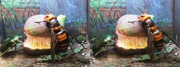 龍遊館 昆虫の世界(交差法)