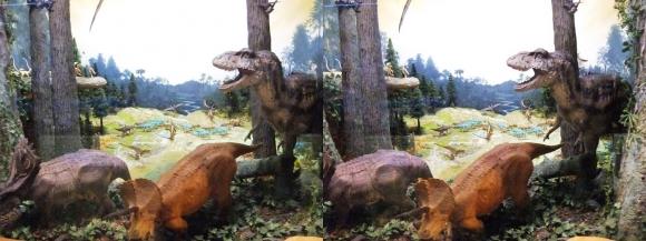 龍遊館 ティラノザウルス&トリケラトプス(平行法)