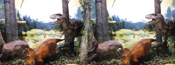 龍遊館 ティラノザウルス&トリケラトプス(交差法)