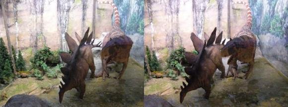 龍遊館 アロサウルス&ステゴザウルス(平行法)