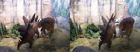 龍遊館 アロサウルス&ステゴザウルス(交差法)