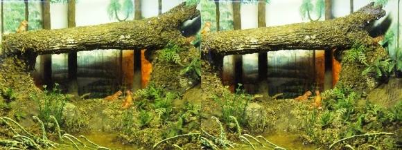 龍遊館 太古の哺乳類(平行法)