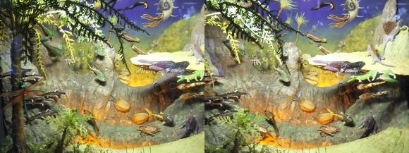 龍遊館 太古の水中生物①(平行法)