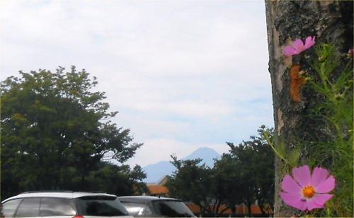 01 500 20140924 妙高山とコスモスfoehn