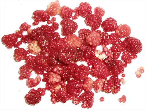 07 500 20140926 Todays raspberry