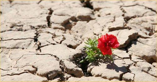 07 Resilience乾いた土壌の花