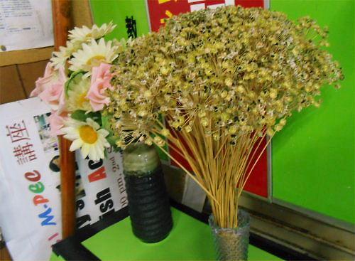 02 500 20141014 韮にらdry-flower LL-Steps