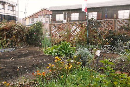 02 500 20141028 LL菜園お疲れ様!百日草~薔薇、堆肥01