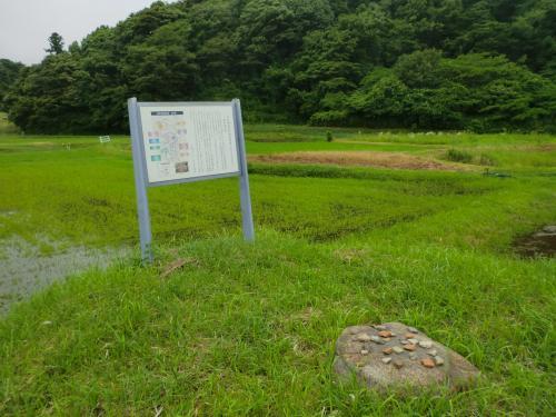 夏井の廃寺跡・11