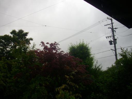 梅雨入り1