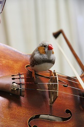 ヴァイオリンおっこ