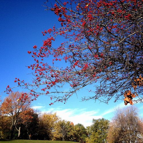 Oct.25,2014 @Parc du Mont-Royal