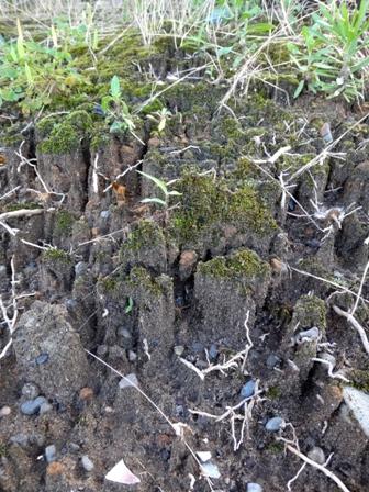 Moss canyon1