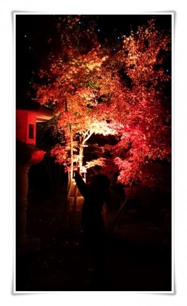 戸川公園・紅葉ライトアップ