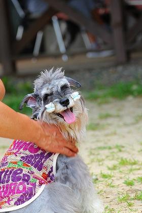 笑う犬ー2