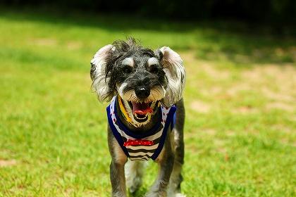 笑う犬ー6