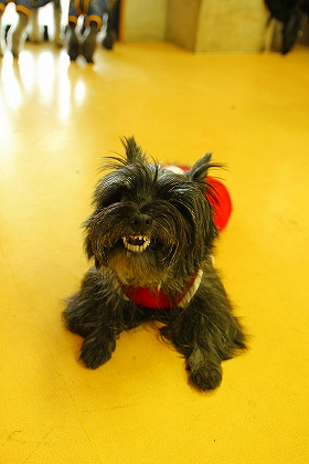 笑う犬ー4