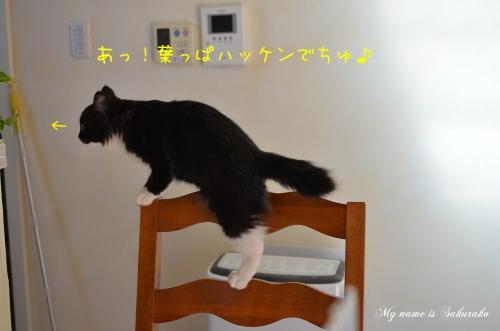 桜子ちゃん♪213