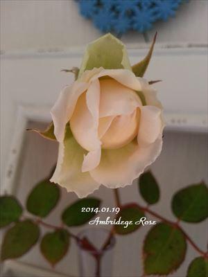20140119 ambridege1_R