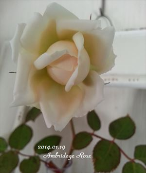 20140119 ambridege5_R