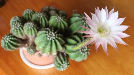 IMG_7197webきサボテンの花2