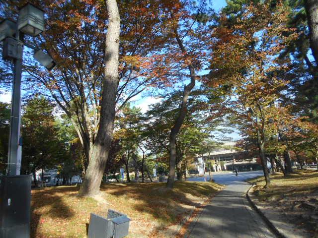 奈良公園①