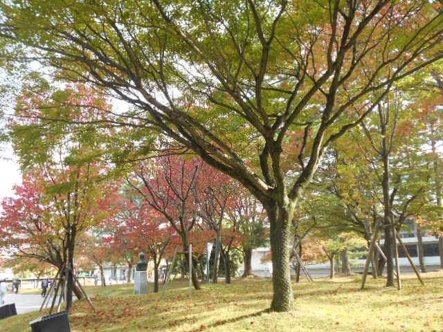 奈良公園③
