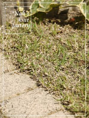 grass06.jpg