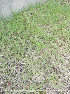 grass07.jpg