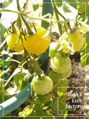 tomato2013-03.jpg