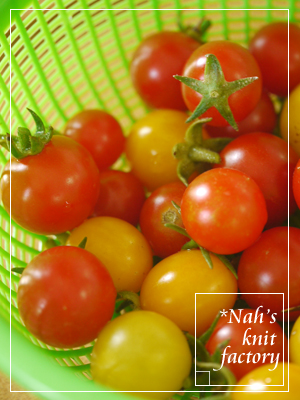 tomato2013-08.jpg