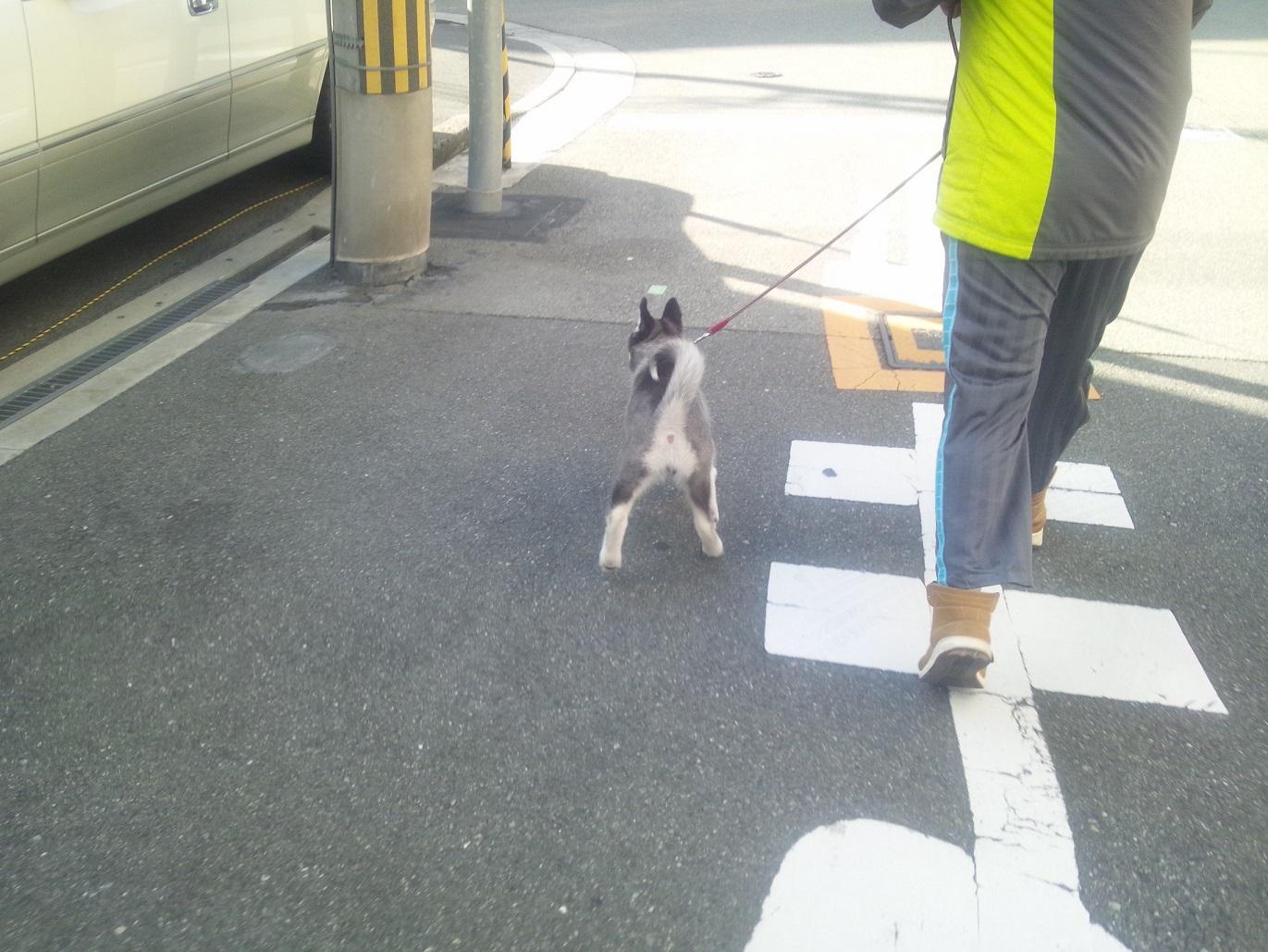 らっしー散歩2