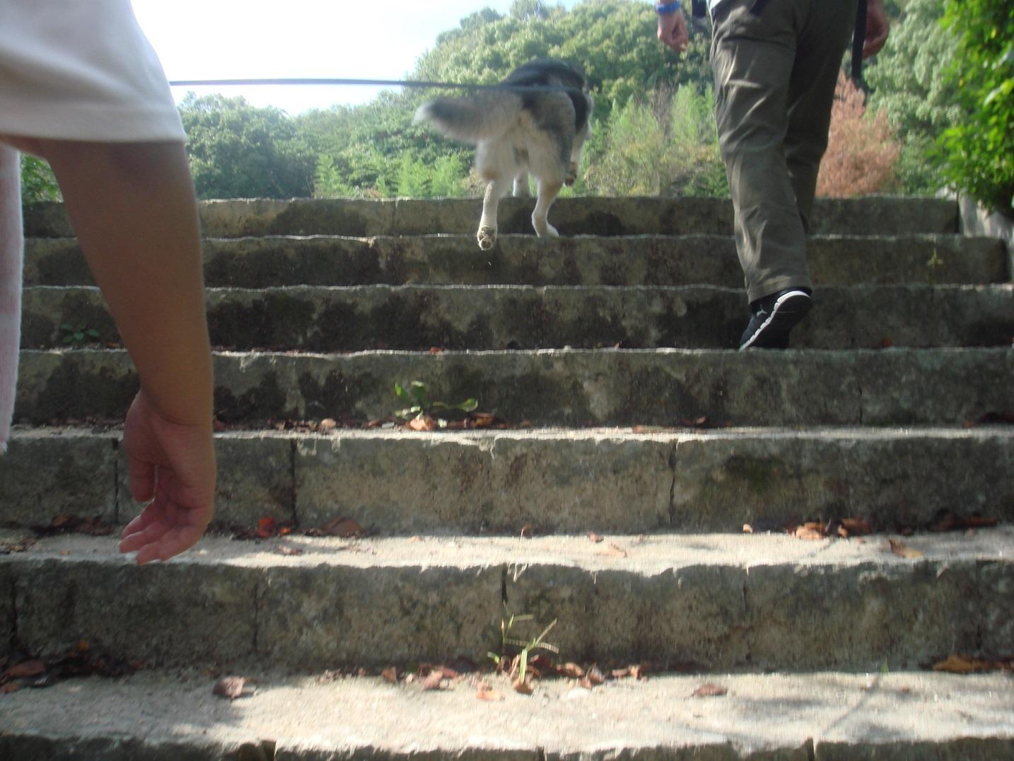 階段をのぼります